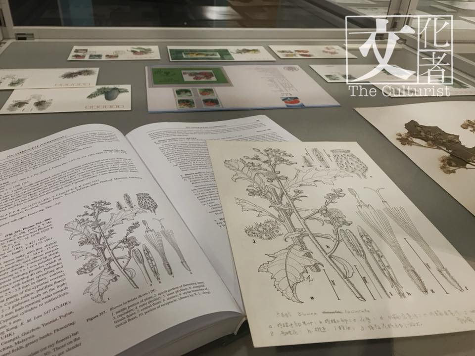 植物科學畫家曾孝濂
